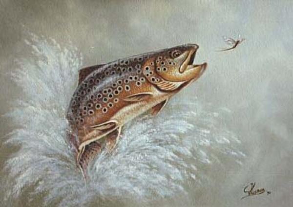 Vissen op forel